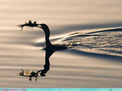 acting like animals bird caring concern fish gentle hunting noms Predator - 4115920384