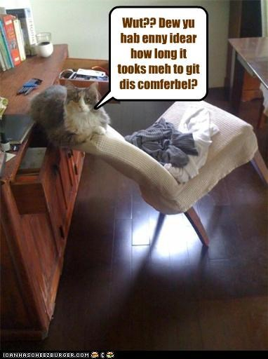 arrangement,caption,captioned,cat,chair,comfortable,effort,energy,furniture,indignant,leaning,long,mess,precarious,time