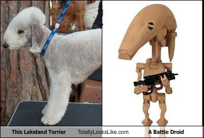 battle droid dogs lakeland terrier robots star wars