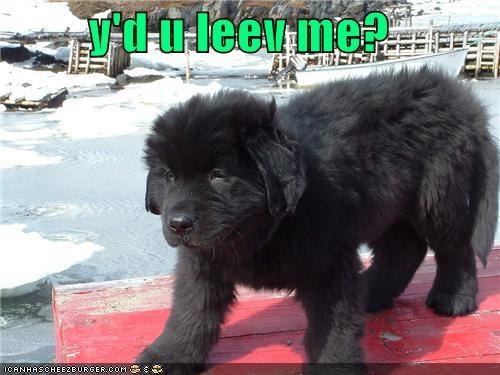 Cheezburger Image 4117630208