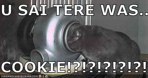 Cheezburger Image 411775232