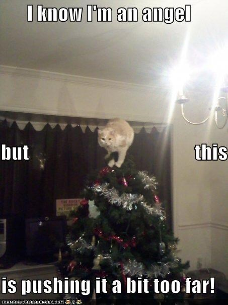 angel,caption,captioned,cat,christmas,christmas tree,i know,literalism,meowy christmas,merry christmas,pushing it,too far