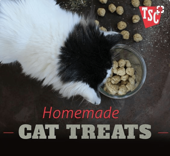 DIY cat treats