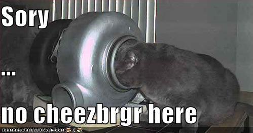 Cheezburger Image 411923200