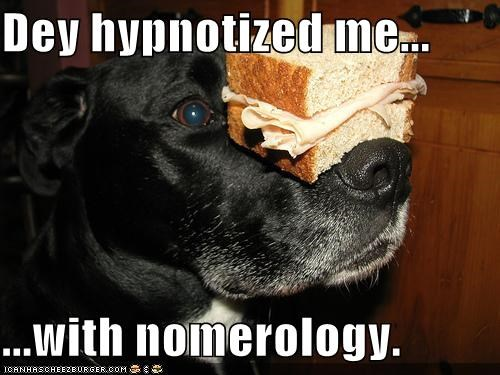 Black Lab food hypnotize hypnotized labrador retriever noms people food sandwich