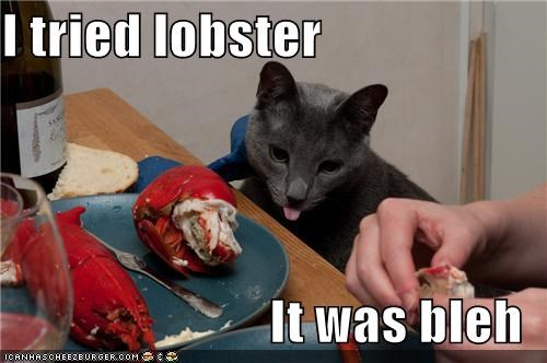 bleh caption captioned cat dislike do not want lobster sample taste tasting testing tried unhappy