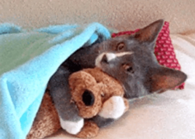 Sad gifs tired Thursday Cats funny sleepy - 4119813