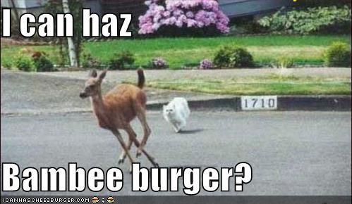 Cheezburger Image 4119987456