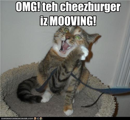 Cheezburger Image 4120644352
