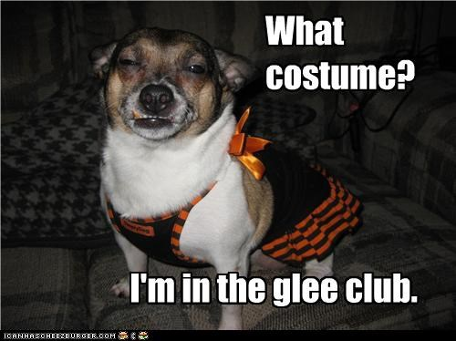 clothes clothing costume dress up glee club halloween jack russell terrier what