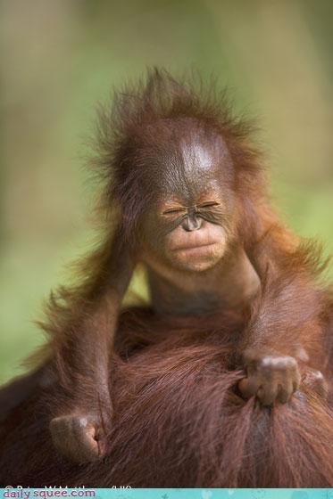 baby,face,monkey