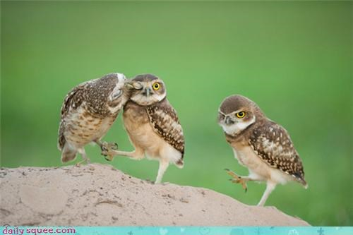 baby cute Owl - 4120985344