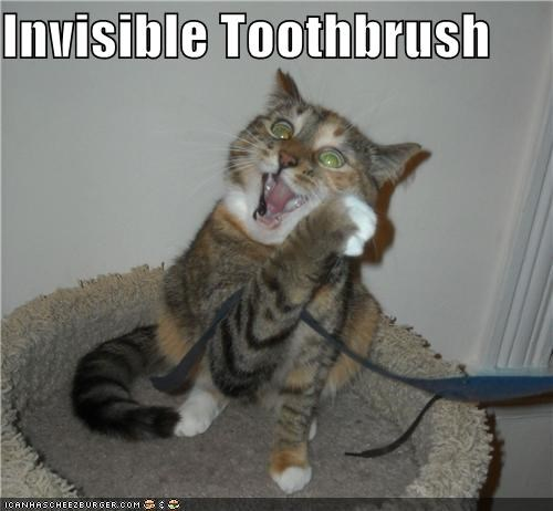 brushing,caption,captioned,cat,invisible,teeth,toothbrush