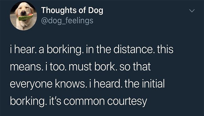 funny dog thoughts