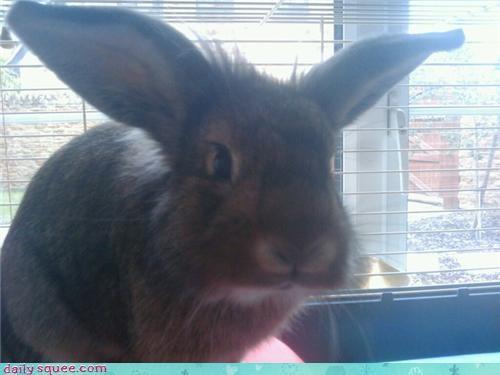 bunny face grumpy - 4121463552