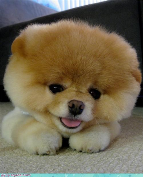 boo floof head pom - 4122176256
