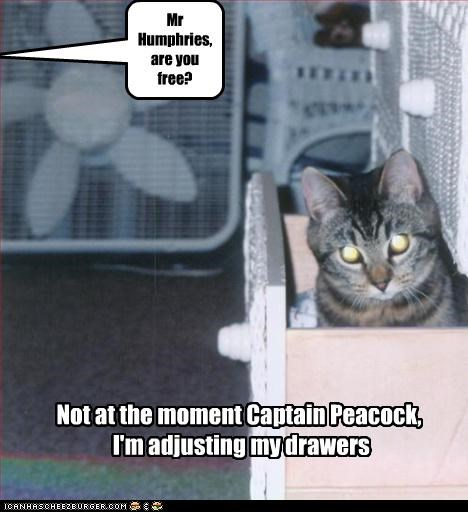 adjusting are-you-free busy caption captioned cat drawer drawers Hall of Fame pun question - 4122416640
