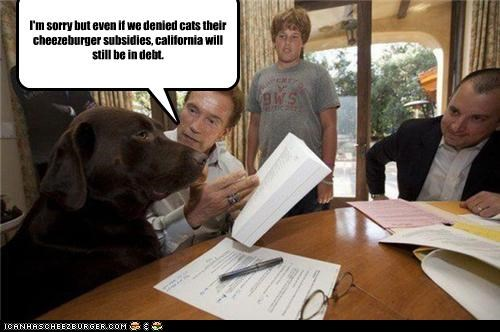 Arnold Schwarzenegger,california,Cats,cheezburgers,debt,dogs,food,lolcats