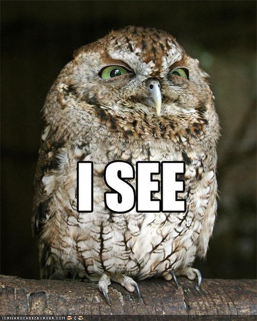 angry caption captioned glare grumpy i see Owl owls - 4123073792