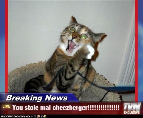 Cheezburger Image 4123322368