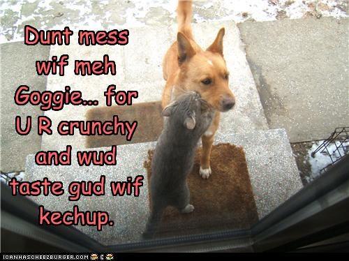 Cheezburger Image 4123750400