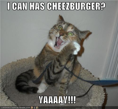 Cheezburger Image 4123902720