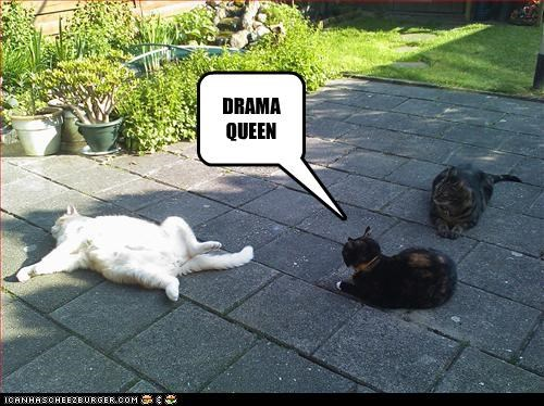 caption,captioned,cat,Cats,drama,Drama Queen,dramatic,name calling,playing dead,queen