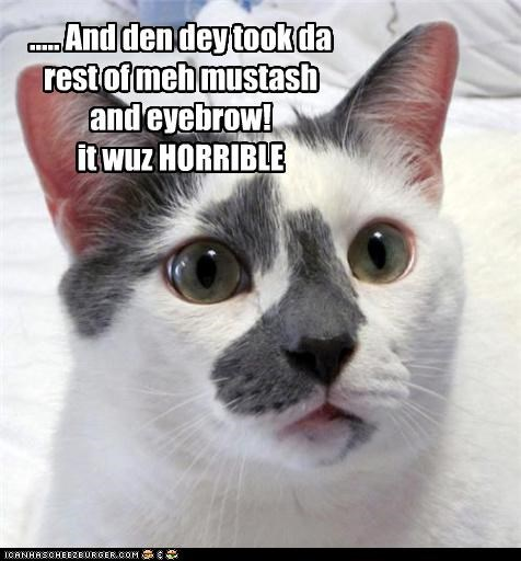 caption captioned cat eyebrow horrible mean mustash recounting Sad story taken whining