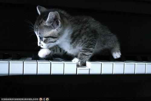 cyoot kitteh of teh day kitten Music piano - 4124399616