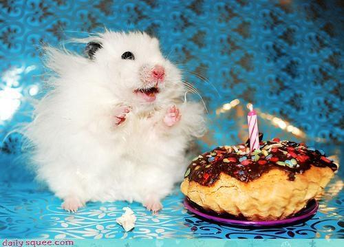 hamster nerd jokes noms