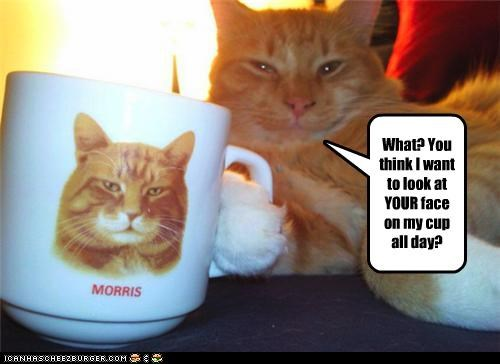 caption captioned cat cup face honestly mug portrait question sarcasm your - 4125576960