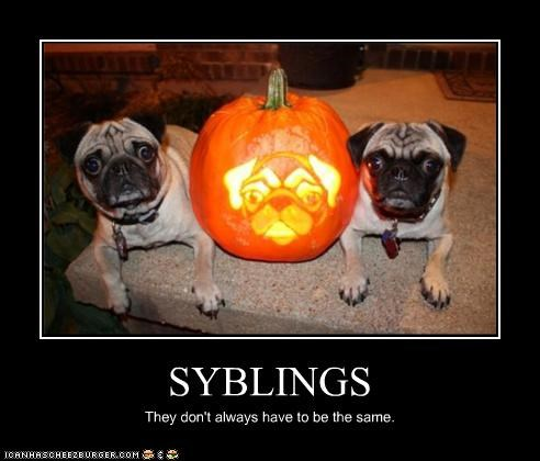 SYBLINGS They don't always have to be the same.