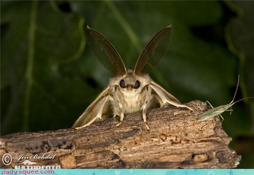 bug cute moth - 4125865984