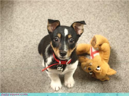 dogs FLCL nerd jokes Puss in Boots user pets - 4125874688