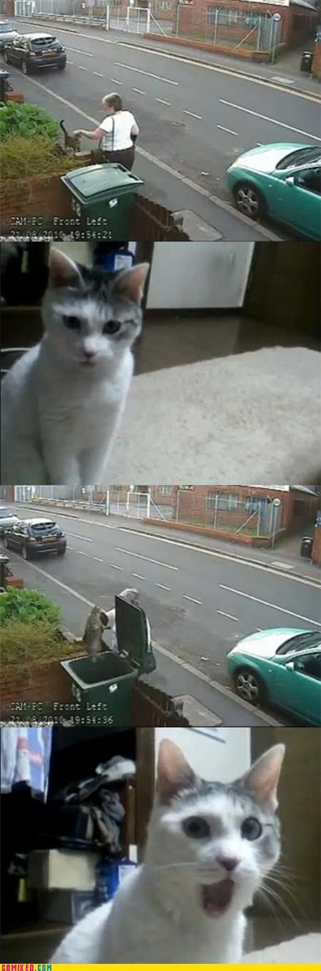 animals,Cats,Caturday,CCTV,mean woman,shocking,the internets