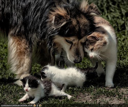 aww,dogs,family,goggies r owr friends,kitten,sweet