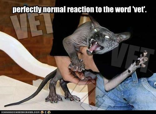caption,captioned,cat,do not want,freaking out,normal,perfectly,reaction,sphinx,vet,word