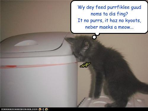 caption,captioned,cat,complaining,confused,do not understand,kitten,noms,Sad,trashcan