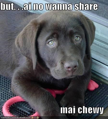 chew toy do not want mine puppy puppy eyes Sad share sharing - 4126684928