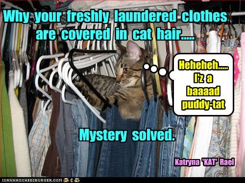 Why your freshly laundered clothes are covered in cat hair..... Mystery solved. Heheheh..... I'z a baaaad puddy-tat Katryna 'KAT' Rael
