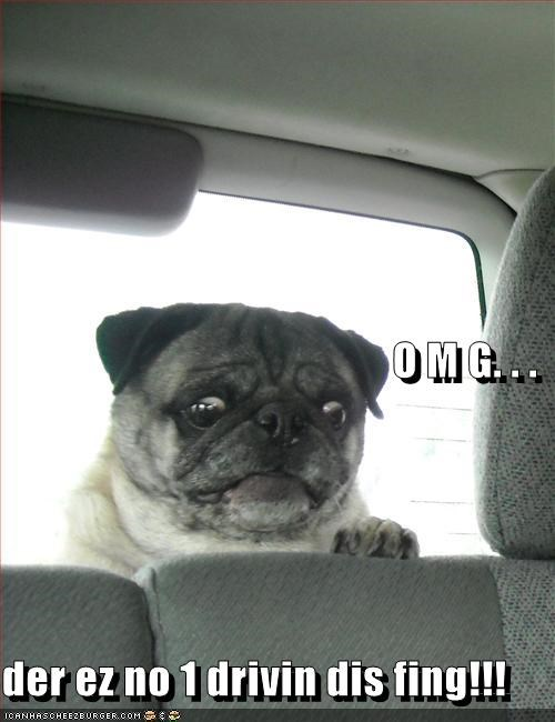 car,driving,funny face,no one,oh my god,omg,panic,pug,scared