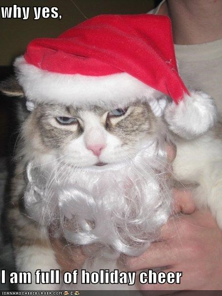beard,caption,captioned,cat,christmas,costume,do not want,hat,meowy christmas,santa hat,sarcasm,upset