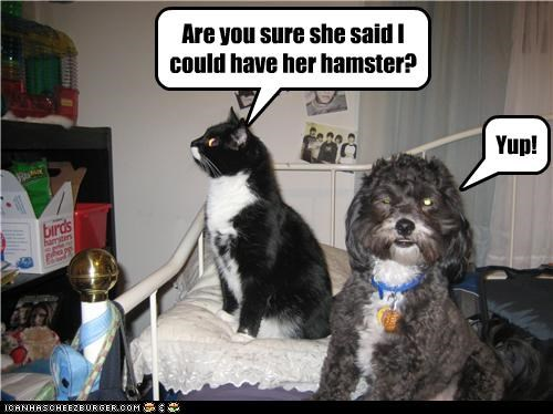 Are you sure she said I could have her hamster? Yup!