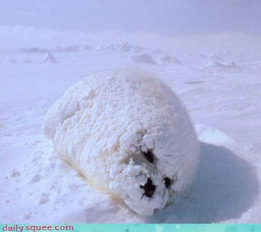 squee seal snowball snow baby pup camouflage - 4128598784