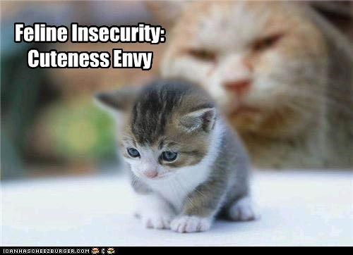 background caption captioned cat cute cuteness envy feline insecurity kitten looming - 4129240064
