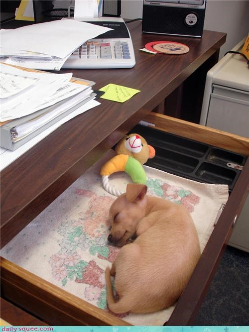 desk pet puppy
