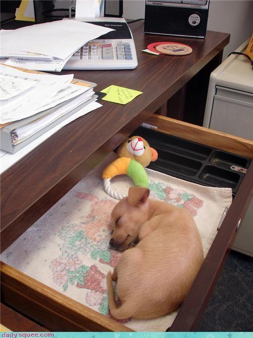 desk pet puppy - 4129279232