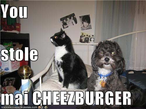 Cheezburger Image 4129281280