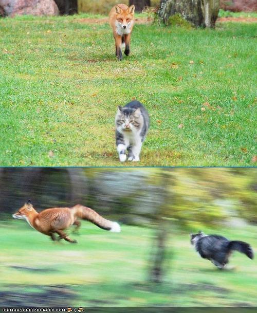 chase fox run story - 4129305856