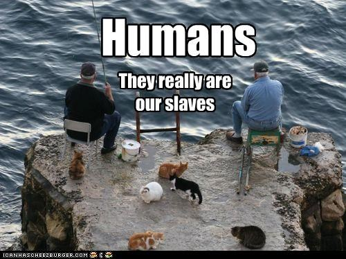 Humans They really are our slaves
